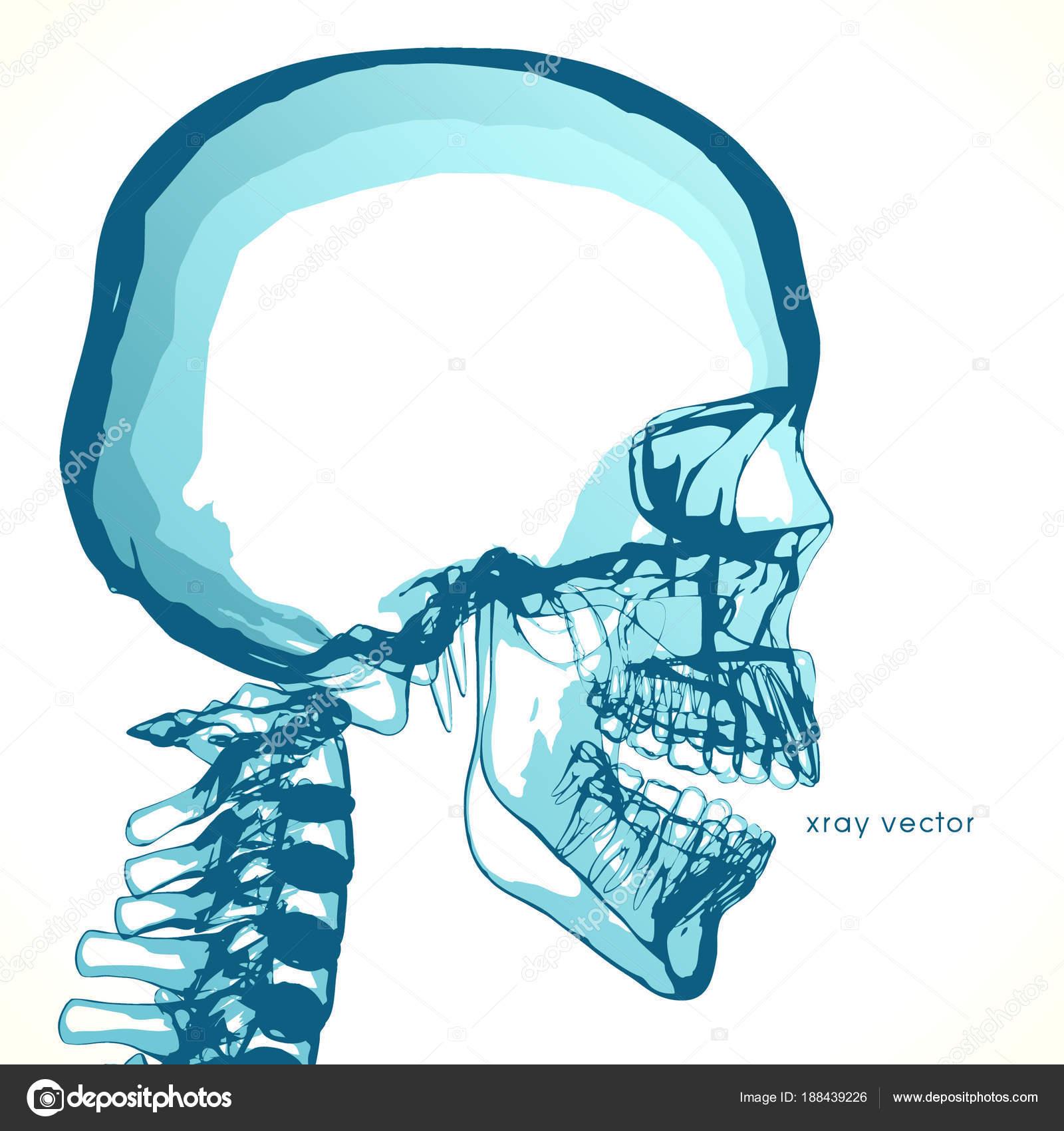 hight resolution of empty skull placing ideas head stock vector