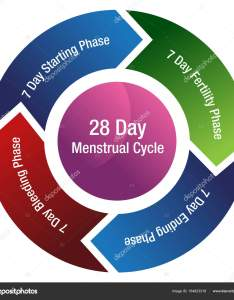 An image of  menstrual cycle chart isolated on white  vector by cteconsulting also fertility stock rh depositphotos