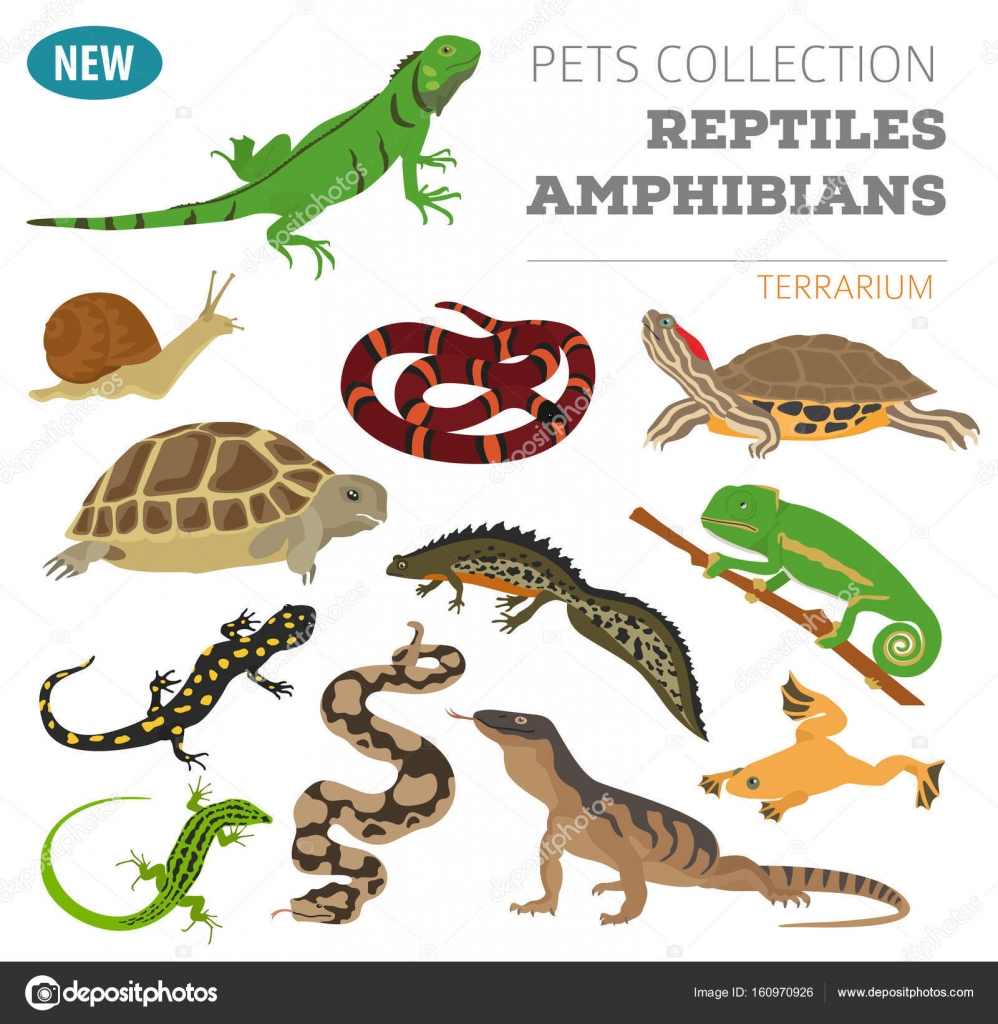 Pet Reptiles And Amphibians Icon Set Flat Style Isolated