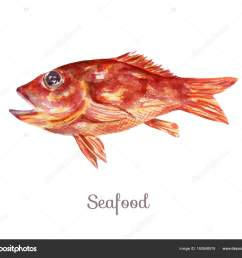 watercolor seafood clipart fish stock photo [ 1600 x 1380 Pixel ]