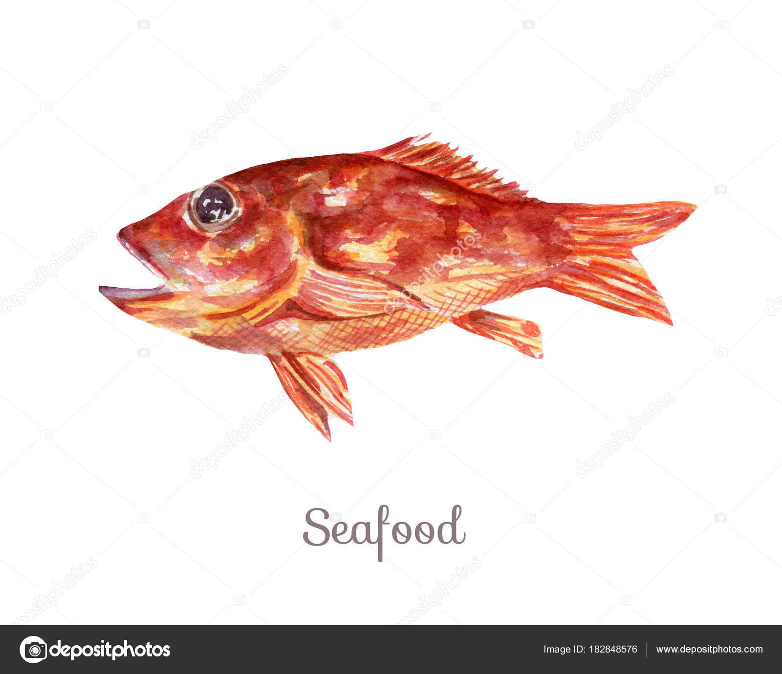 hight resolution of watercolor seafood clipart fish stock photo