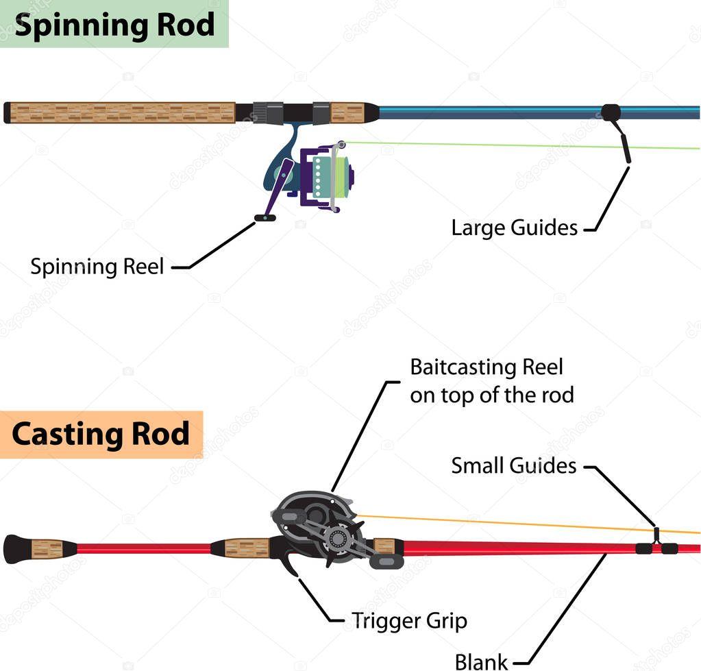 hight resolution of diagram of spinning rod and baitcasting rod vector illustration vector de stock