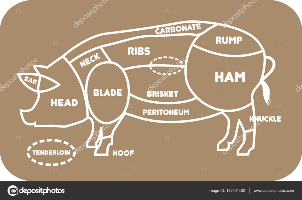 pork butcher cuts diagram visio road map or pig barbecue vector illustration meat butchers selection shop by timka