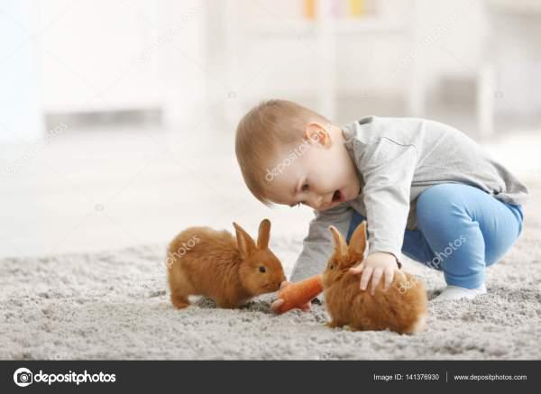 20+ Bunny Rabbit Boy