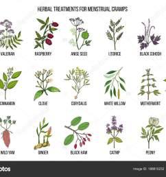 best herbs for menstrual cramps treatment stock vector [ 1600 x 1100 Pixel ]