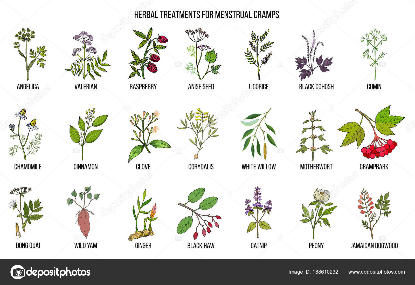 hight resolution of best herbs for menstrual cramps treatment stock vector