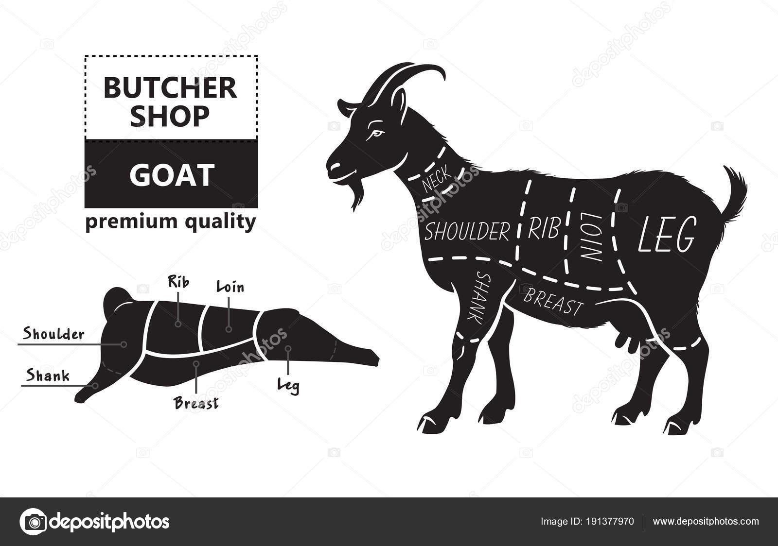 hight resolution of vector illustration goat cuts diagram or chart goat black silhouette stock vector