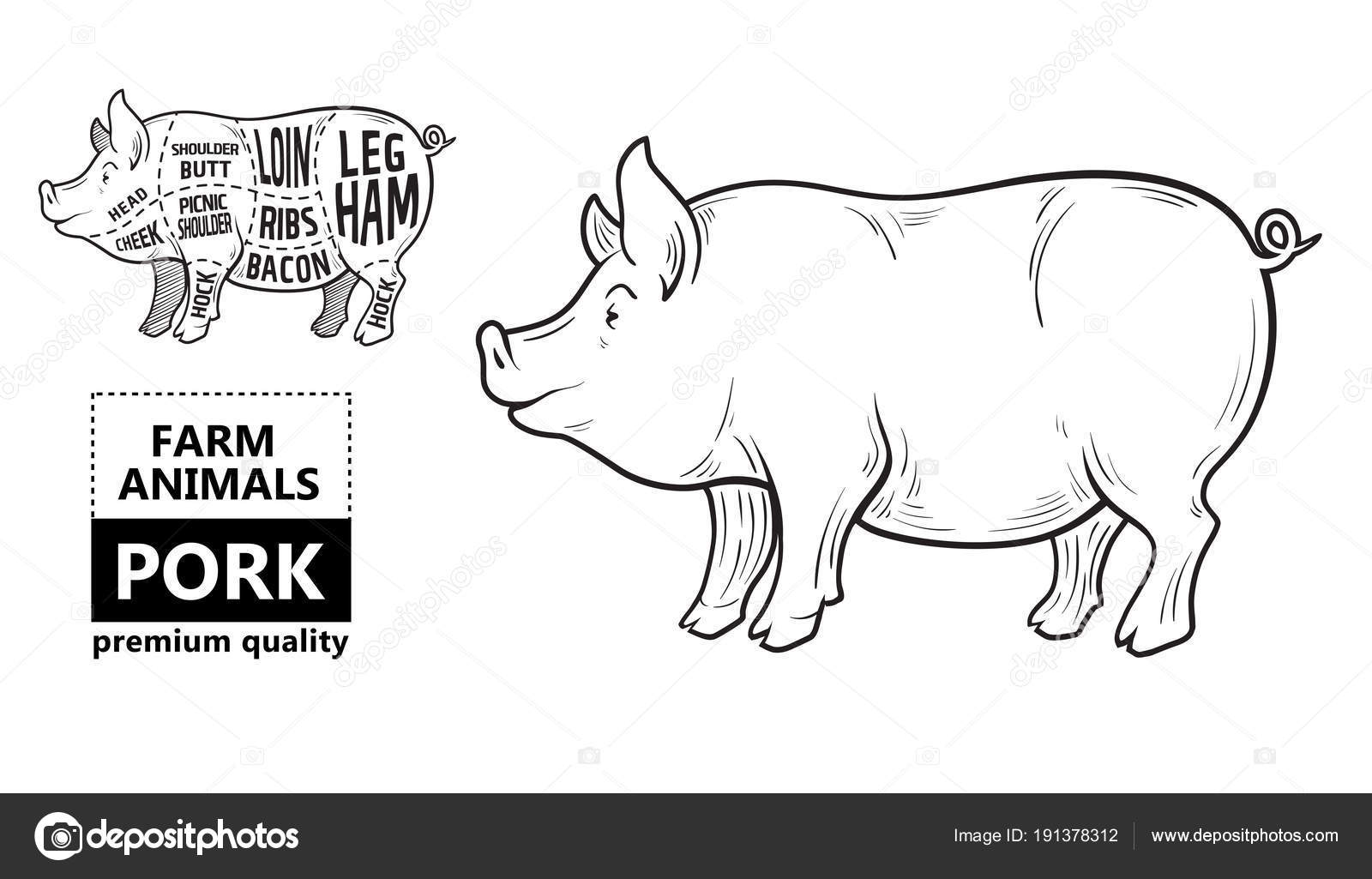 hight resolution of cut of meat set poster butcher diagram scheme and guide pork vintage typographic hand drawn on a black chalkboard background