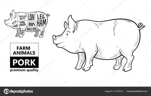small resolution of cut of meat set poster butcher diagram scheme and guide pork vintage typographic hand drawn on a black chalkboard background