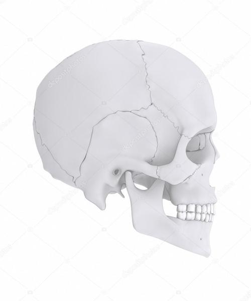 small resolution of human skull bones anatomy parts diagram photo by