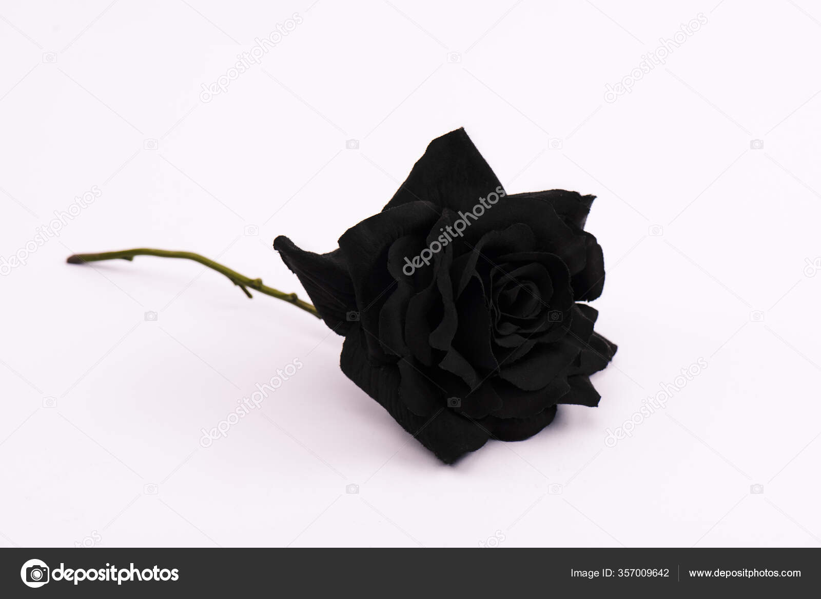 Áˆ Roses Hd Stock Wallpapers Royalty Free Rose Pictures Download On Depositphotos