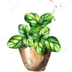 Kitchen Herb Kit Gift Baskets 厨房草药在一盆罗勒植物水彩手绘插图在白色背景下隔离 图库照片 C Daria
