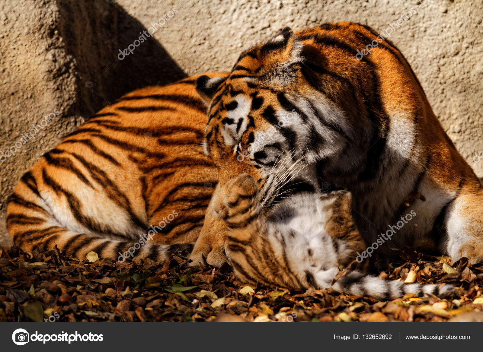 the tiger mum in