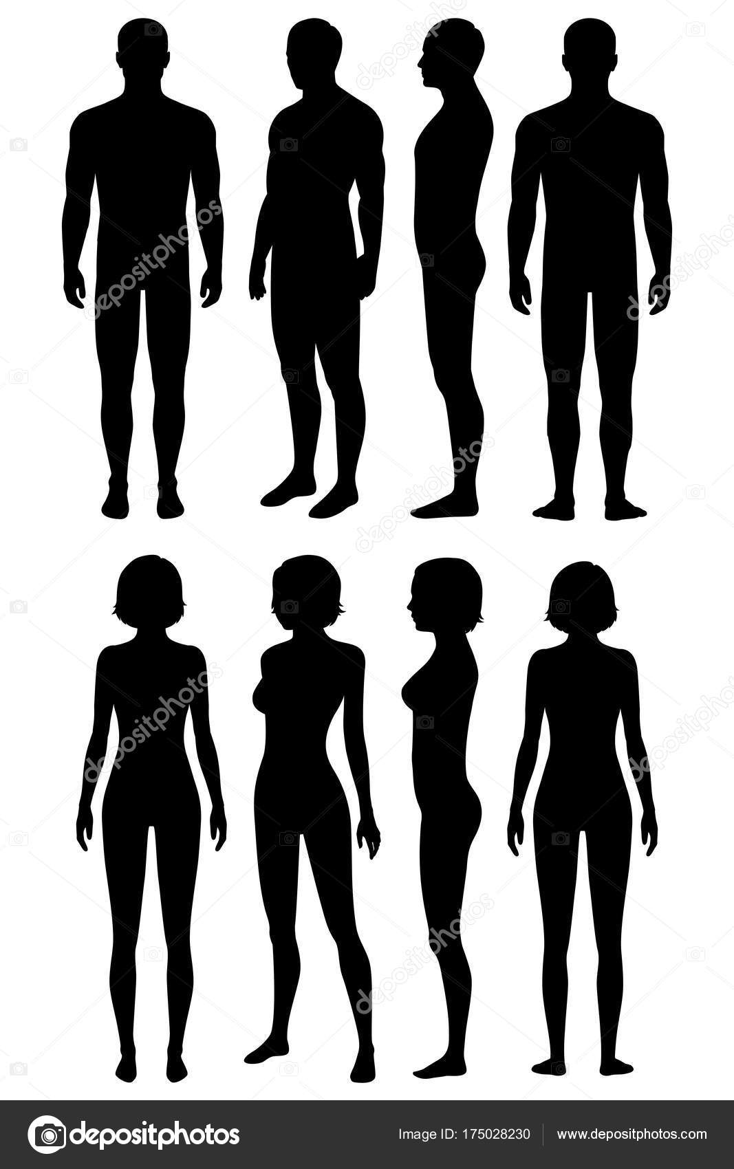 Human Body Anatomy Front Back Side View Vector Woman Man
