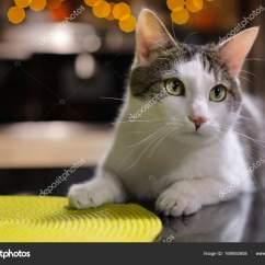 Cats In The Kitchen High Chairs 猫在厨房里的黑色的桌子上 图库照片 C Flamasterka 169592608