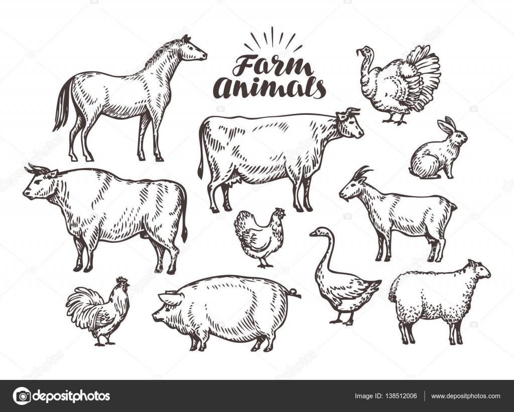 Fazenda Desenho Vetorial Animais De Colecao Como Cavalo