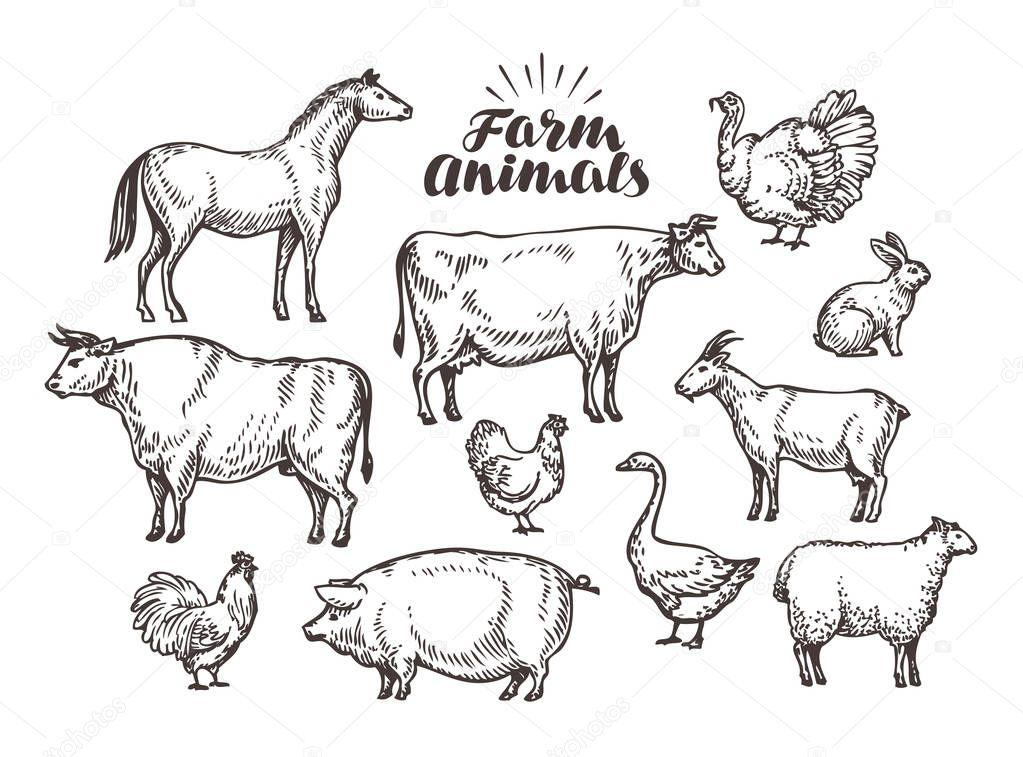 Farm, vector sketch. Collection animals such as horse, cow