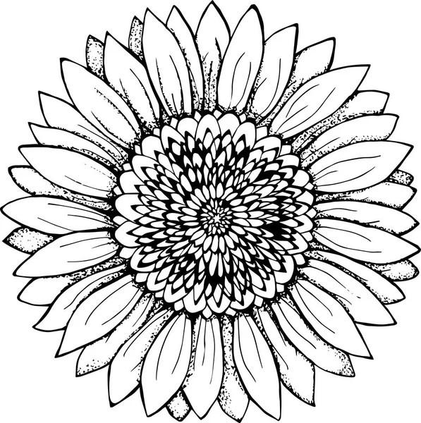 Mandala vector, mandala art, mandala design, mandala