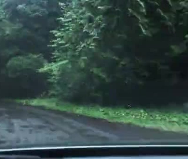 High Speed Car Chase Pov Some Woods Lush Forest Road Stock Footage