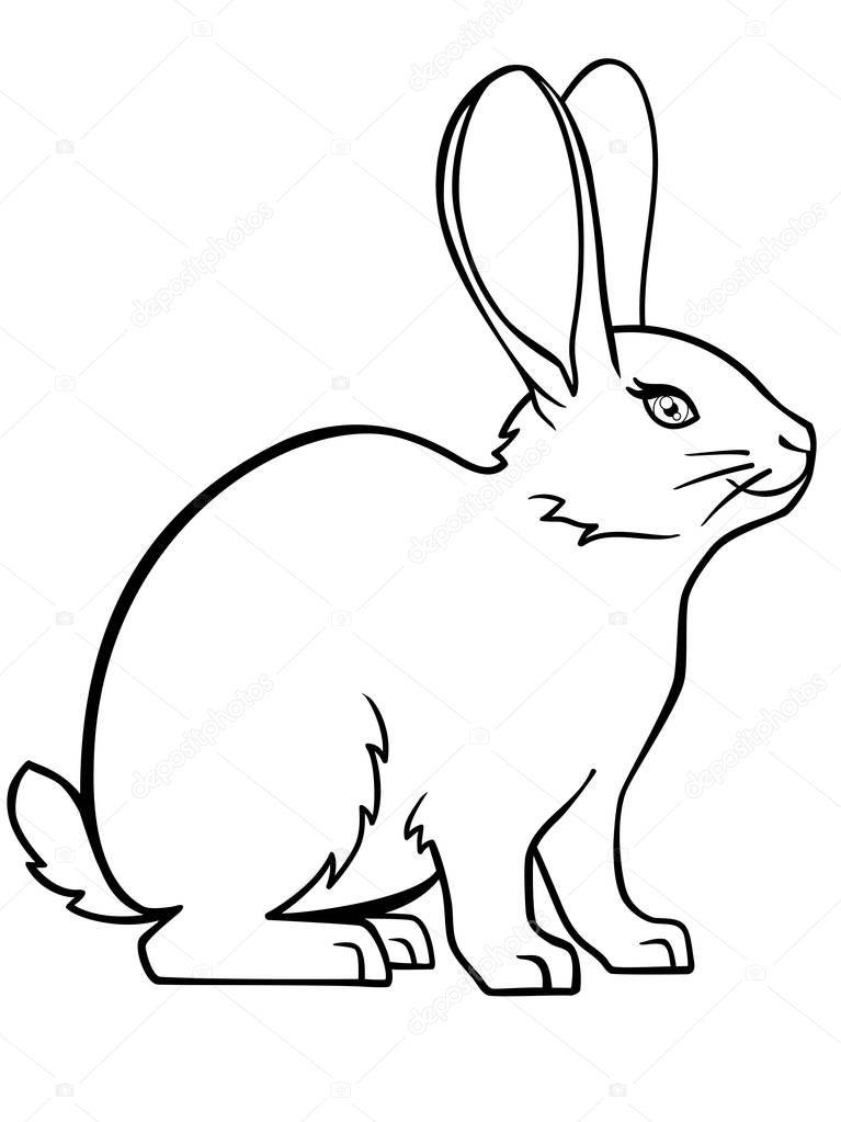 Кролик Банни Линейный Рисунок Кролика Шаблон Окраски