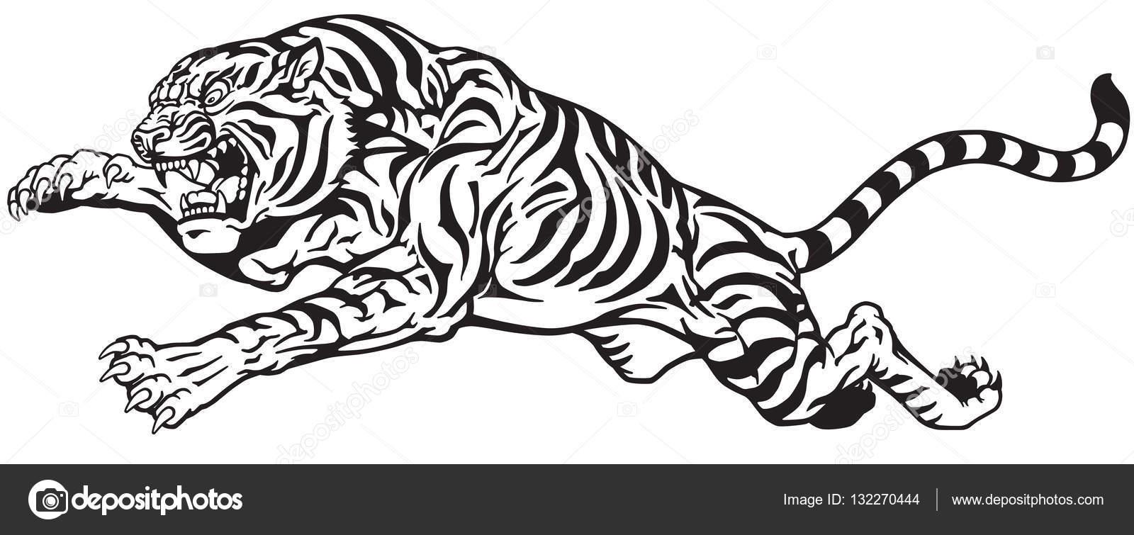 salto de tigre blanco y negro — Archivo Imágenes