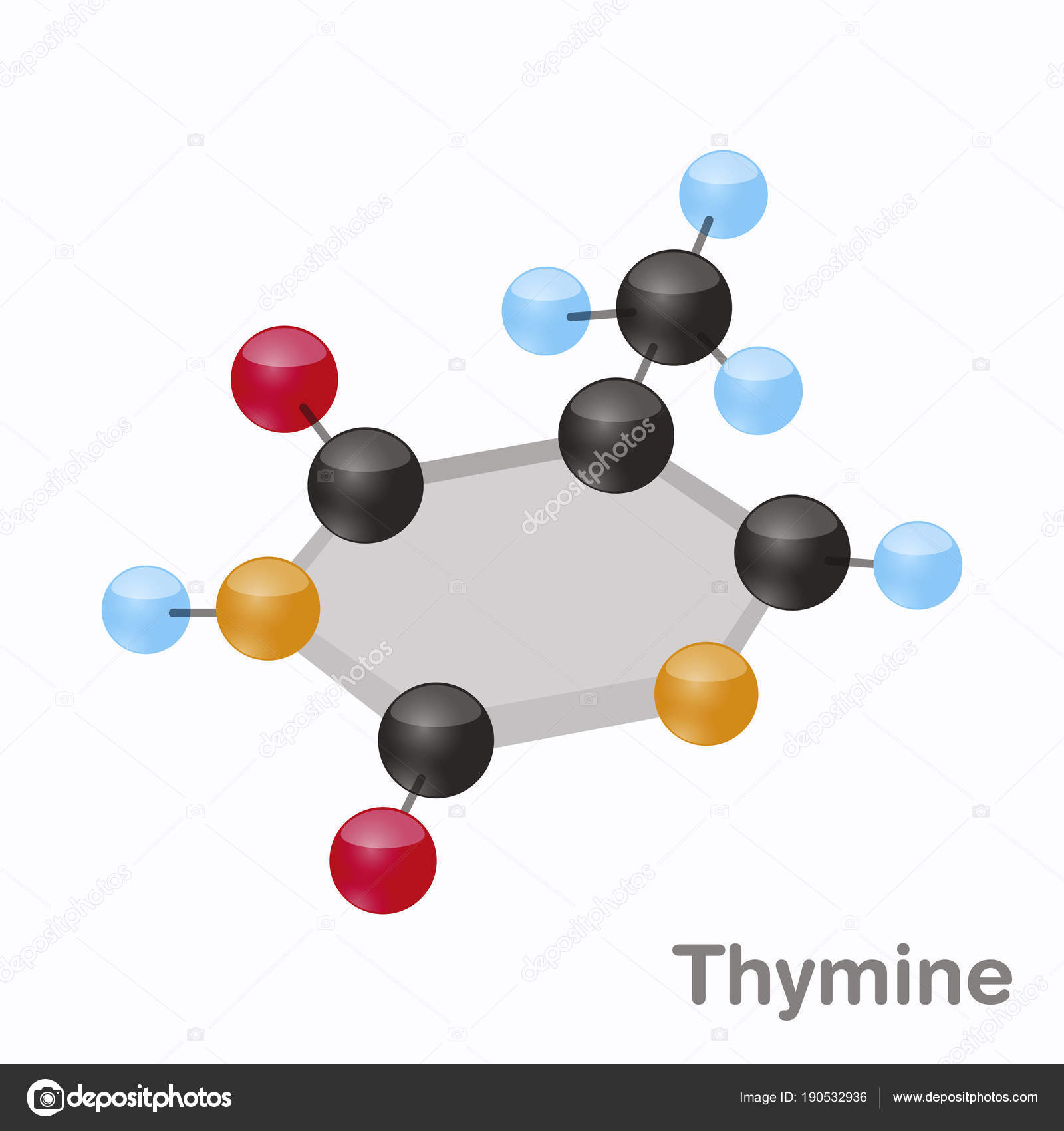 hight resolution of thymine hexnut t purine nucleobase molecule present in dna 3d vector illustration