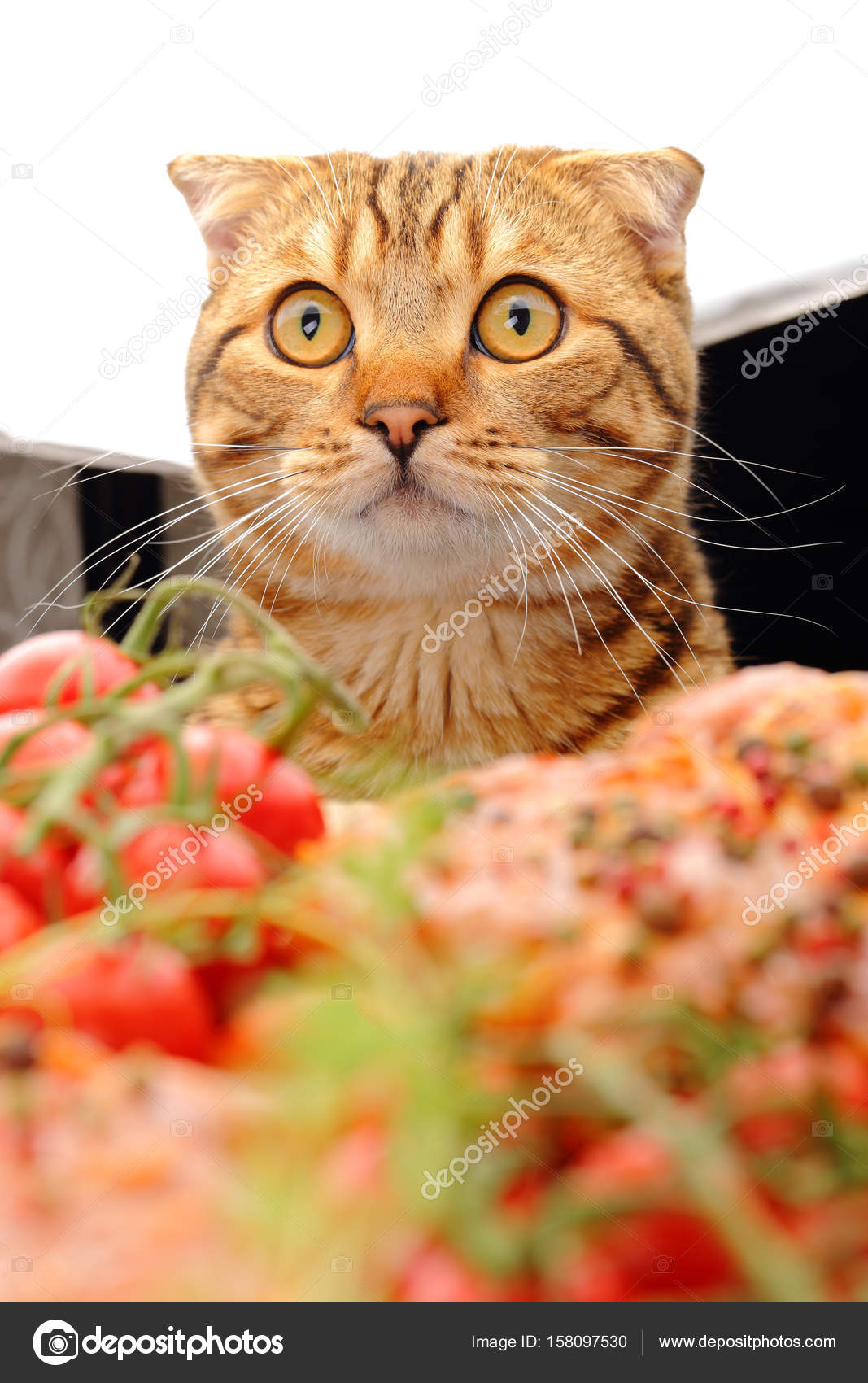 cats in the kitchen cabinet pulls and knobs cat is watching stock photo c superanry 158097530