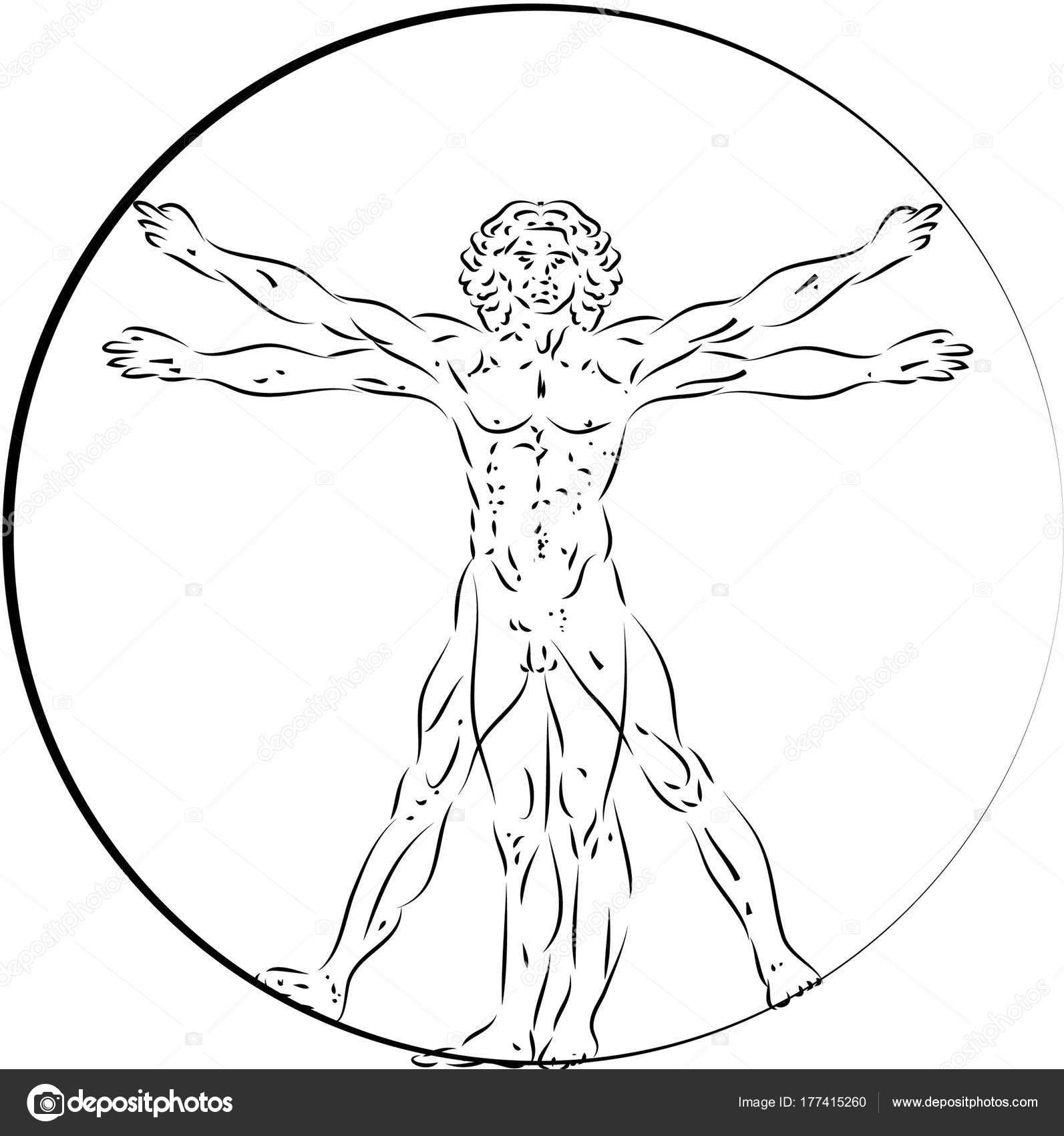 Uomo Vitruviano Disegno Da Stampare Colorarest
