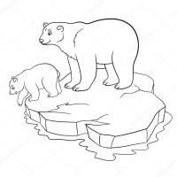 Dibujos: osos polares para colorear | Dibujos para ...