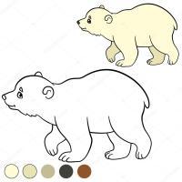 Imagenes Oso Polar Para Colorear