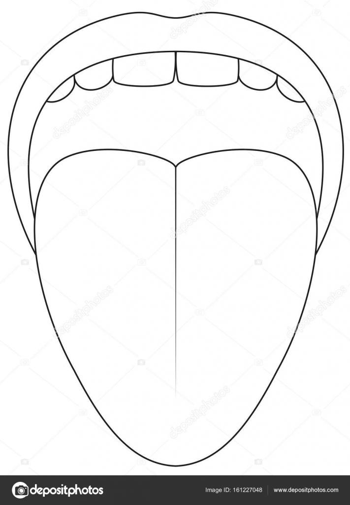 diagram of tongue taste