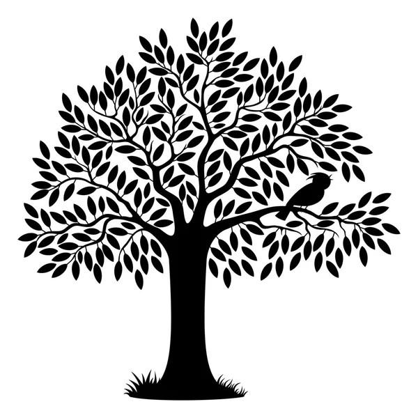 Black tree silhouette on white — Stock Photo