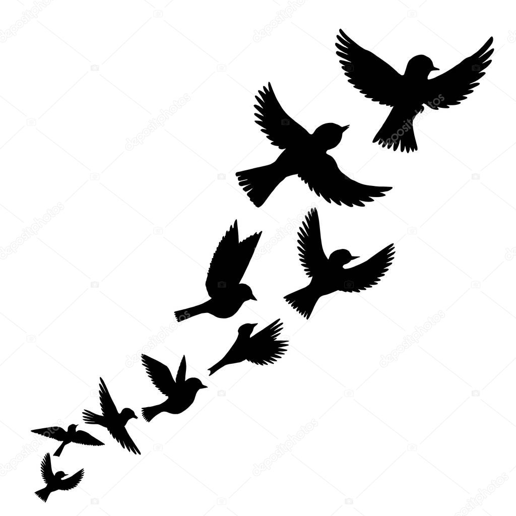 Vetorial Silhuetas De Passaros A Voar