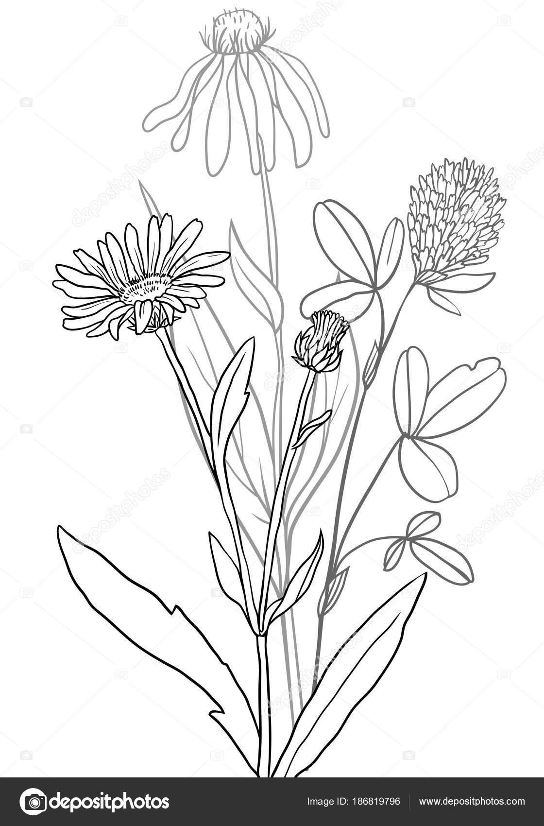 plantas medicinales de vector — Archivo Imágenes