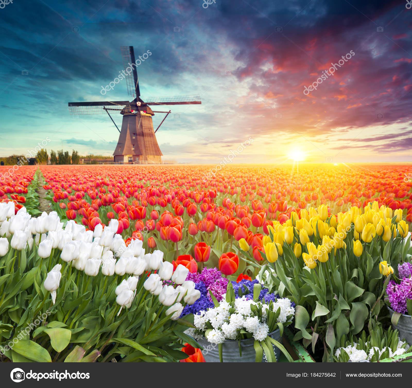 Tradizionale paesaggio olandese Olanda Olanda con un