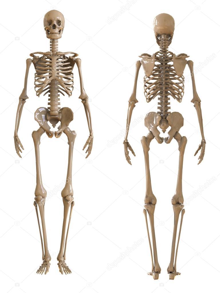Anatomische Fotografie Bilder