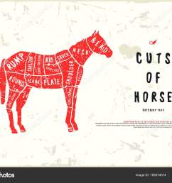 stock vector horse cuts diagram in the style of handmade graphics illustration with rough texture color print on white background vector by neuevector [ 1600 x 1156 Pixel ]
