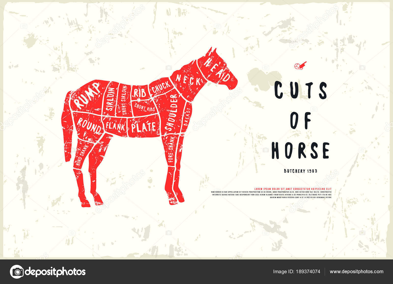 hight resolution of stock vector horse cuts diagram in the style of handmade graphics illustration with rough texture color print on white background vector by neuevector