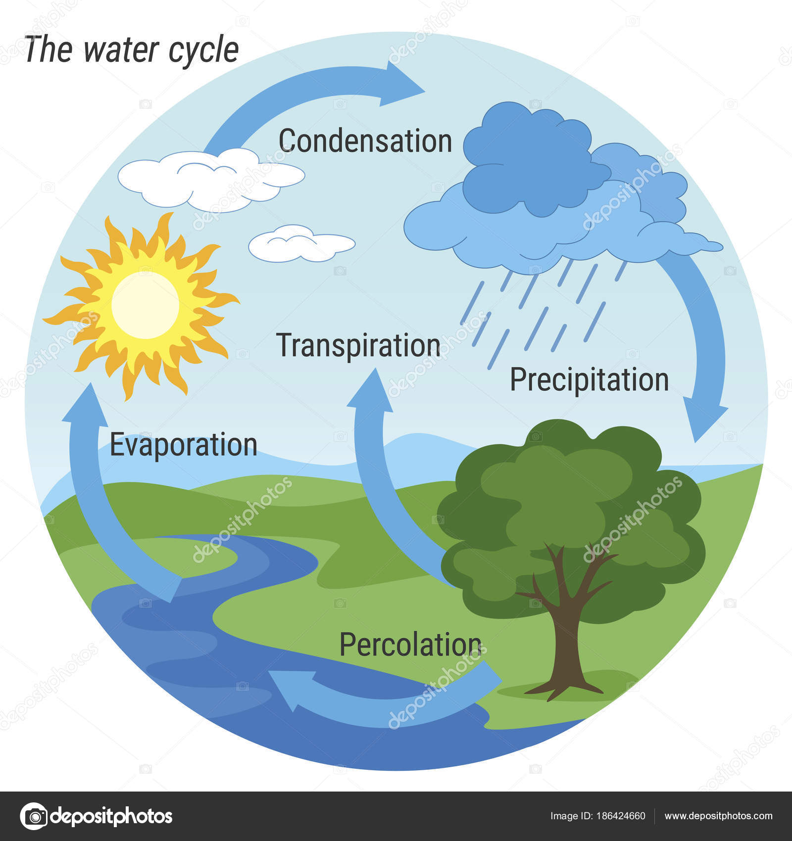 hight resolution of vector schematic representation of the water cycle in nature illustration of diagram water cycle cycle water in nature environment vector by 3xy