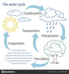 vector schematic representation of the water cycle in nature illustration of diagram water cycle cycle water in nature environment  [ 1600 x 1700 Pixel ]