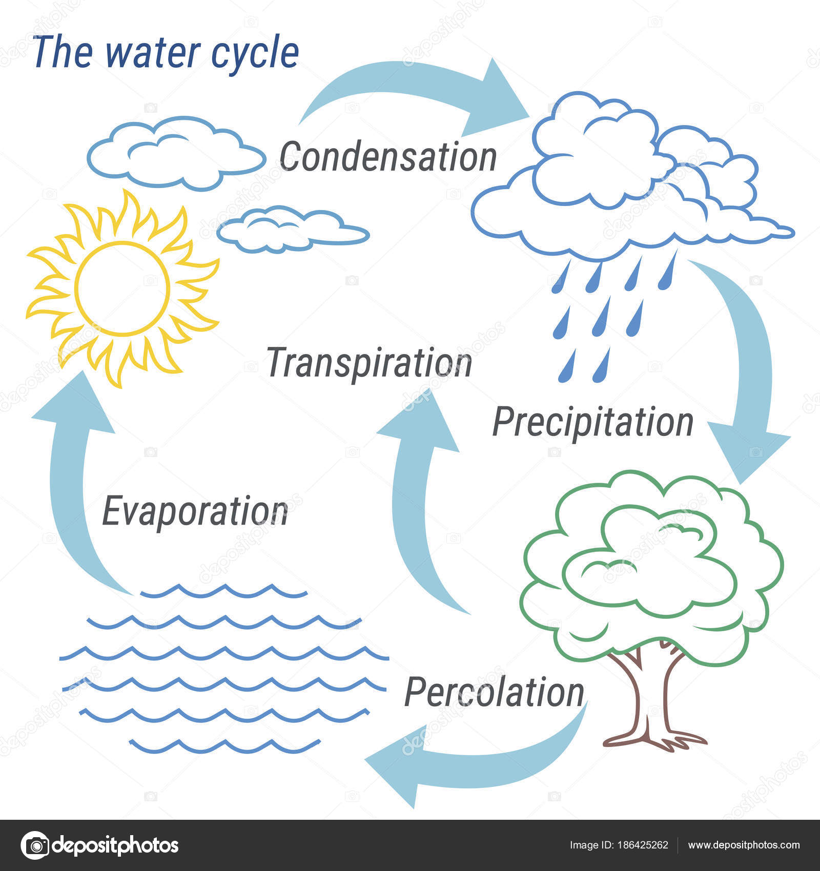 hight resolution of vector schematic representation of the water cycle in nature illustration of diagram water cycle cycle water in nature environment