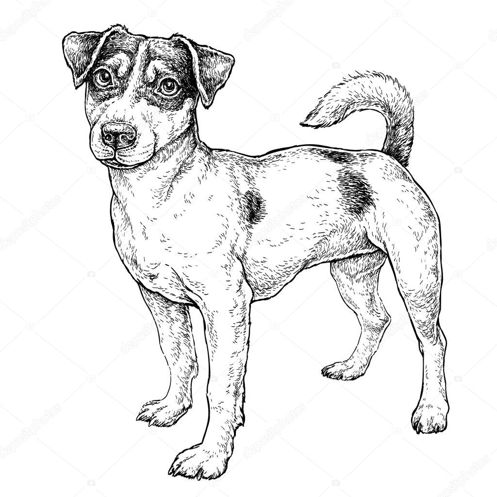 Hand Drawn Sketch Cute Funny Jack Russell Terrier Vector
