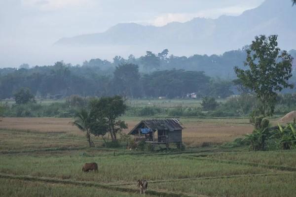 paesaggio e agricoltura terreni in Thailandia  Foto Stock