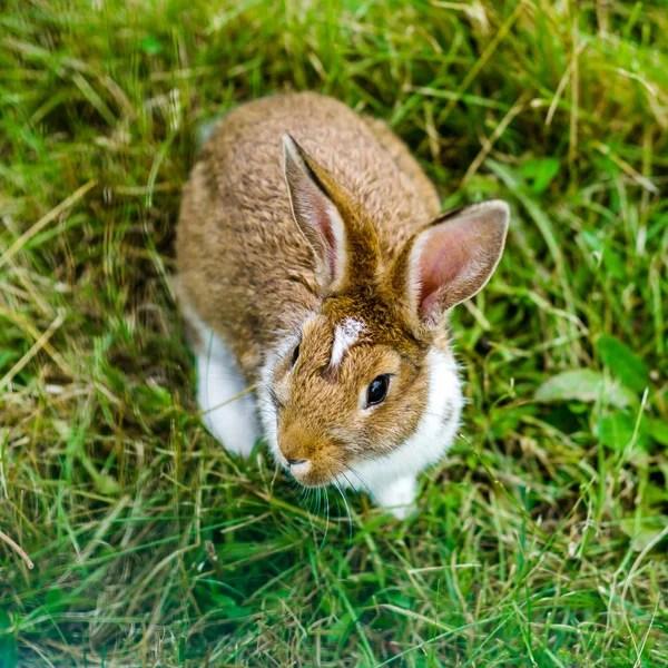 棕兔水彩畫圖庫照片,免版稅棕兔水彩畫圖片|Depositphotos