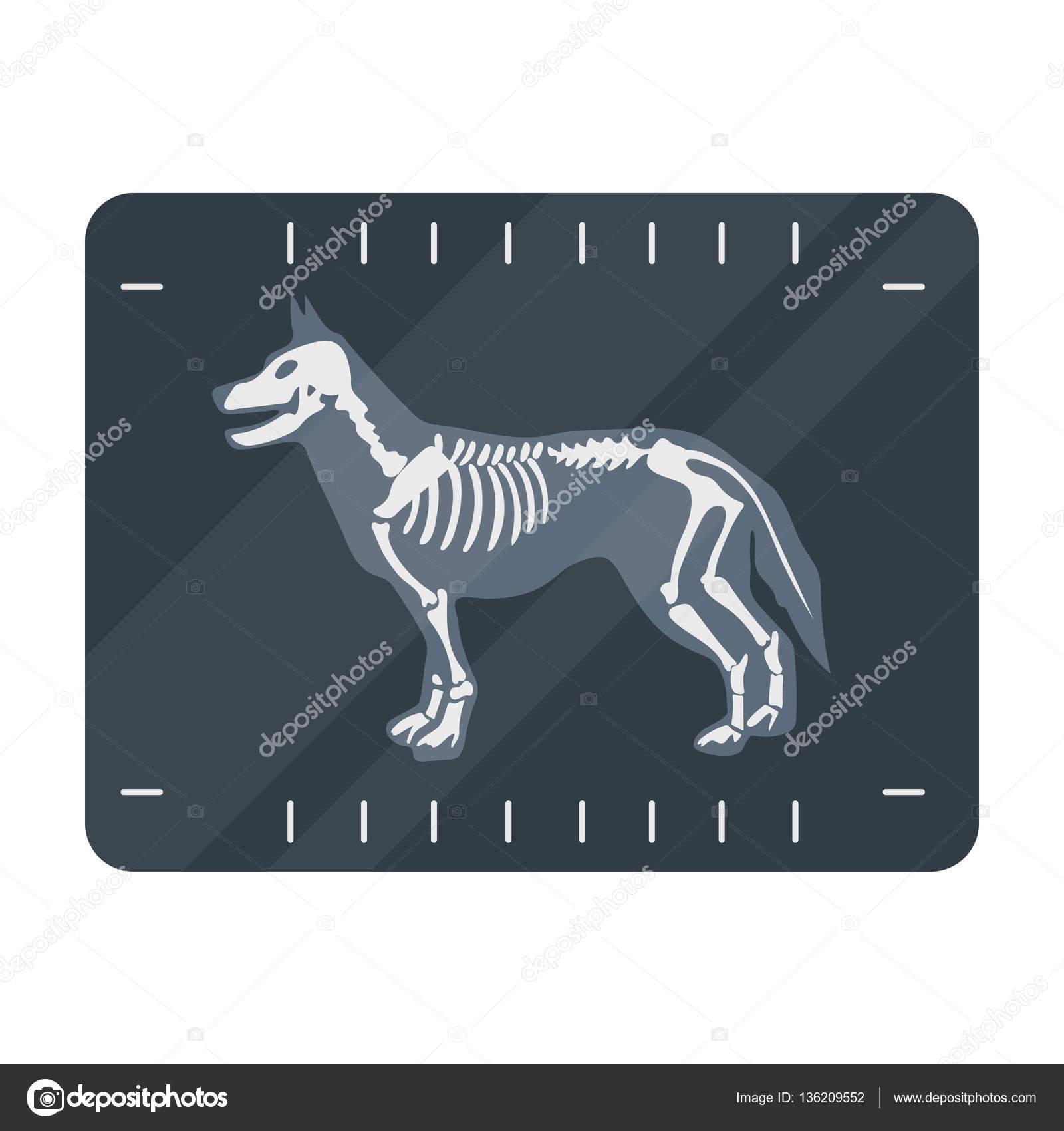 Dog X Ray Cartoon