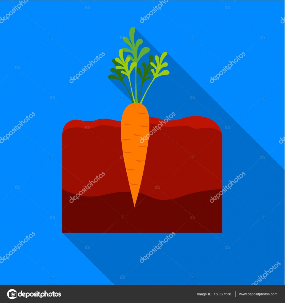 carrot plant diagram kubota starter solenoid wiring icon flat single from the big farm garden agriculture