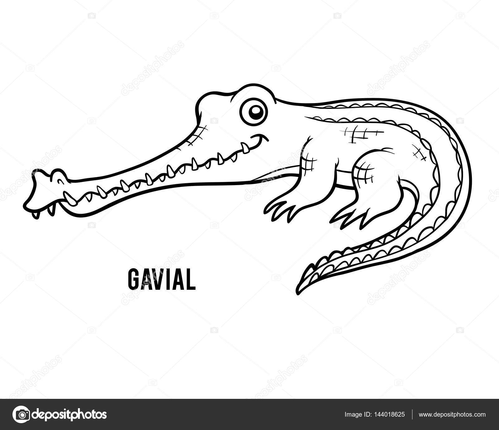Coloring Book Crocodile Gavial