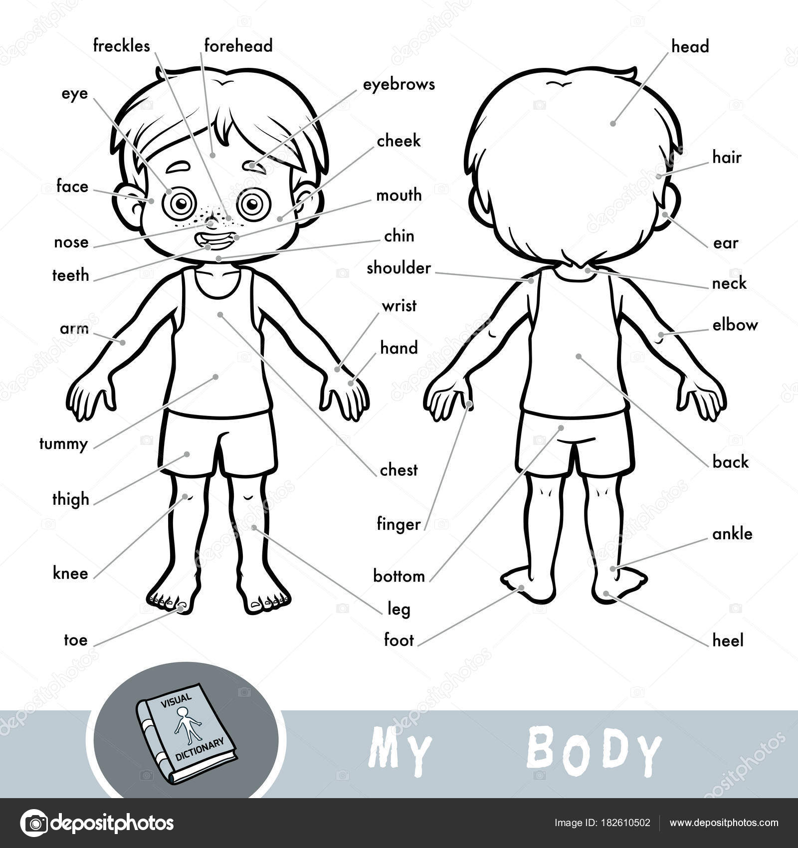 Visual Dictionary For Children About The Human Body My
