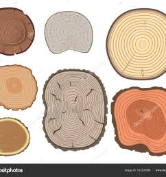 tree wood trunk slice texture circle cut wooden raw material vector detail plant years history textured [ 1600 x 1324 Pixel ]