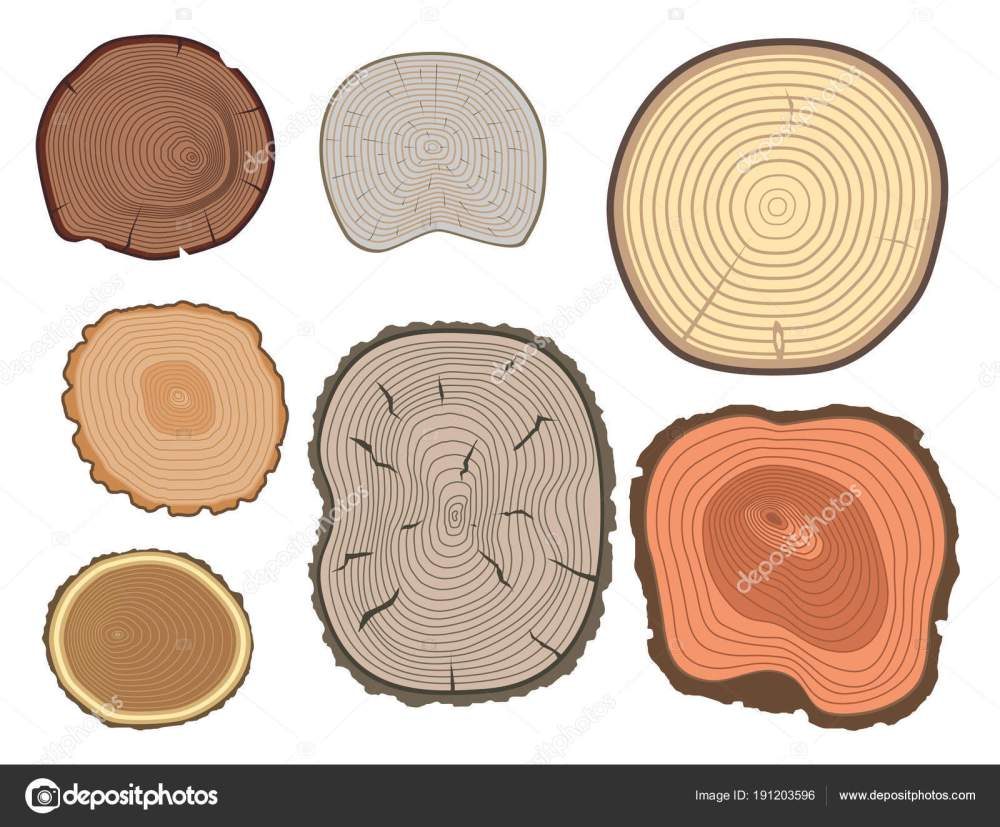 medium resolution of tree wood trunk slice texture circle cut wooden raw material vector detail plant years history textured